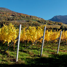 Wineyards of the sunny Montan